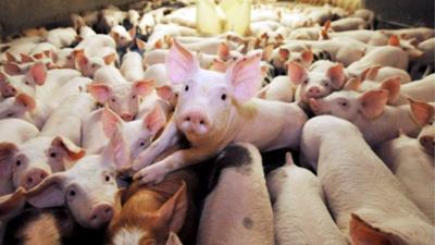 Photo of Sabes quem são os mais porcos de Hollywood?