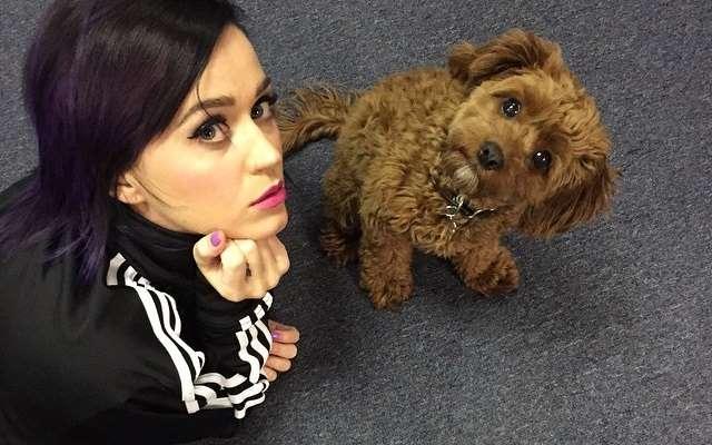 Photo of Katy Perry partilha numero de telemóvel por engano no instagram