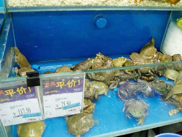 1. Rãs e tartarugas