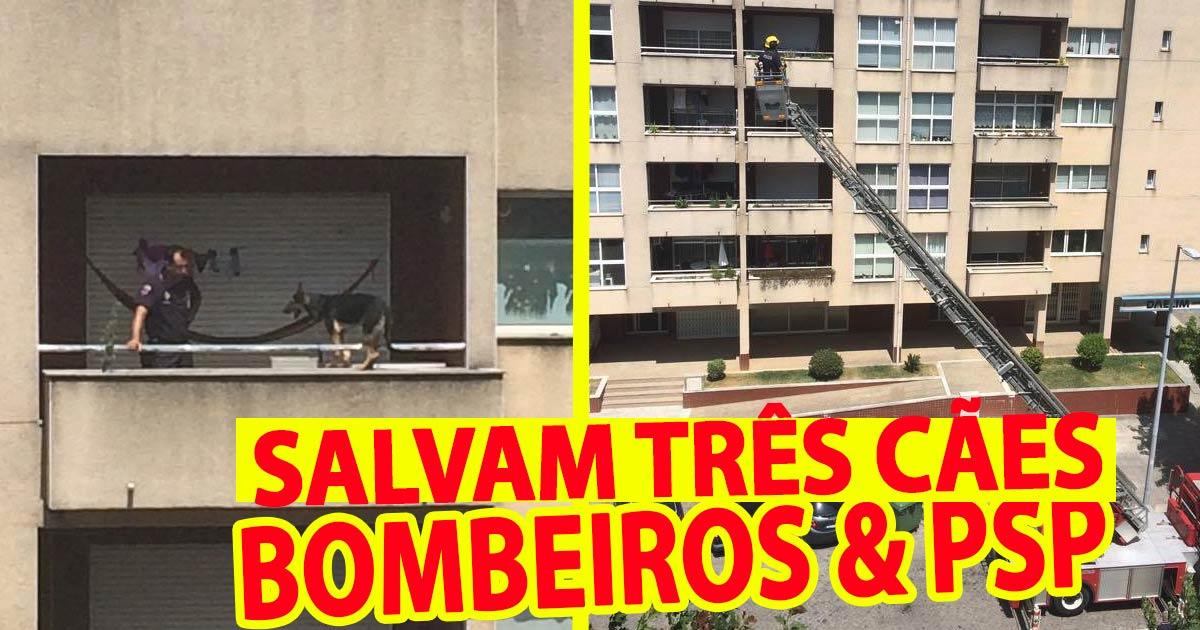 Photo of Cães abandonados e em perigo salvos por bombeiros e PSP em BARCELOS