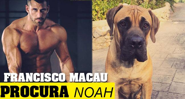 Photo of Francisco Macau está desesperado à procura de Noah ?