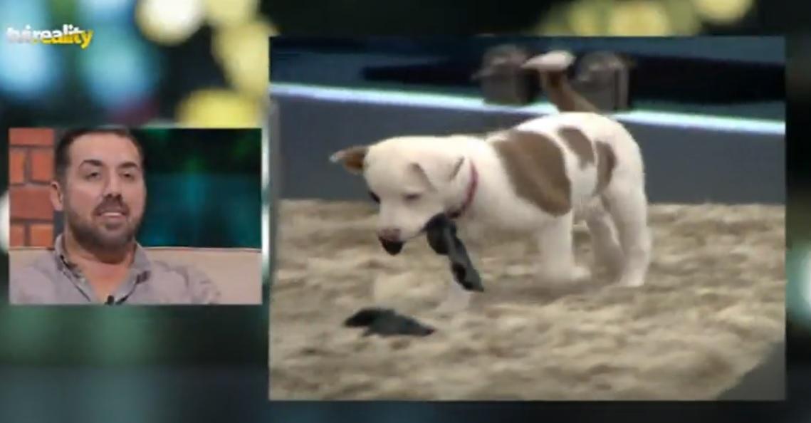Photo of Como está a cadelinha Maria Francisca do Big Brother Vip 5 anos depois