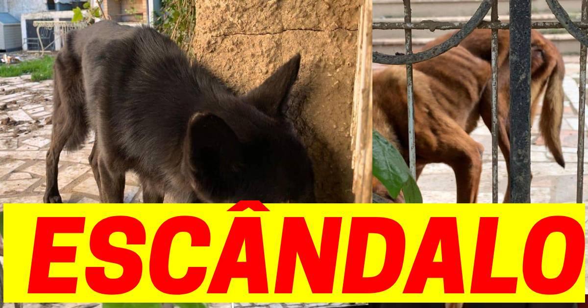 Photo of Maya denunciou FAMOSOS que deixaram animais a MORRER à fome!