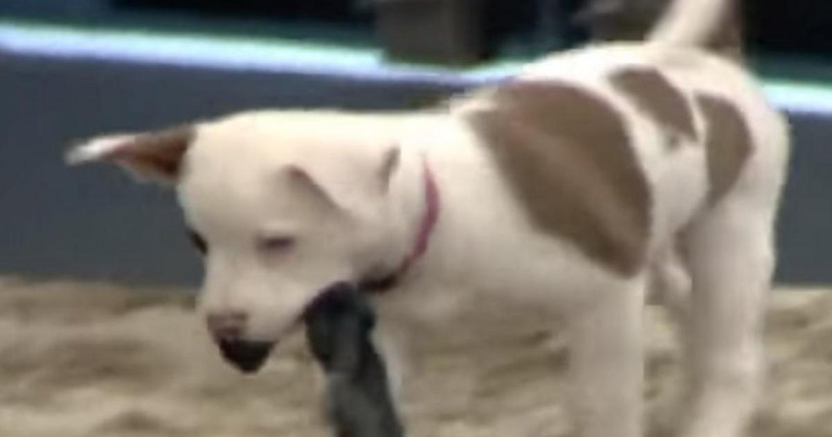 Photo of Lembras-te da Maria Francisca, a cadela do Big Brother VIP? Vê como ela está!