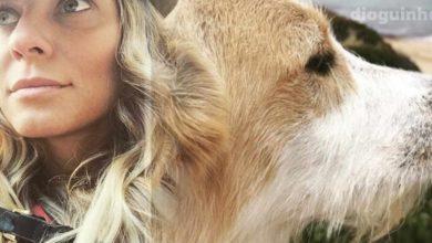 Photo of Joana Solnado «A minha cadela foi atropelada por um ser humano sem humanidade»